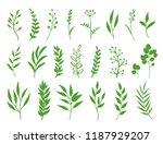 hand drawn natural set of green ... | Shutterstock . vector #1187929207