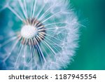 closeup dandelion on natural... | Shutterstock . vector #1187945554