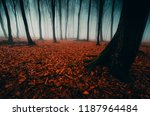 forest landscape with old trees ... | Shutterstock . vector #1187964484