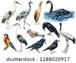Set Of Birds  Watercolor...