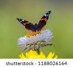 close up view of red admiral... | Shutterstock . vector #1188026164
