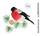 bullfinch on a branch of pine...   Shutterstock .eps vector #1188039544