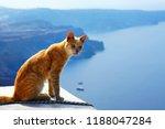 Greek Red Cat  Is Sitting...