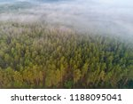 pine forest view from above....   Shutterstock . vector #1188095041