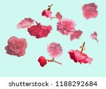 Stock photo beautiful flying pastel pink flowers at light blue background creative floral layout horizontal 1188292684
