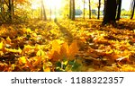 autumn trees on sun in park | Shutterstock . vector #1188322357