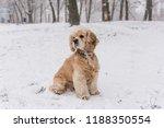 portrait of cute cocker spaniel ... | Shutterstock . vector #1188350554
