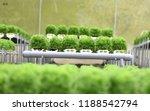 green coral farm at cameron... | Shutterstock . vector #1188542794