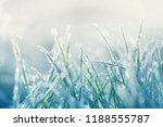 grass in the frost. frost on... | Shutterstock . vector #1188555787