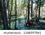 swamp in deciduous forest | Shutterstock . vector #1188597841