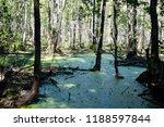 swamp in deciduous forest | Shutterstock . vector #1188597844
