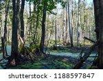 swamp in deciduous forest | Shutterstock . vector #1188597847