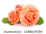 Orange Roses Flowers On Branch...