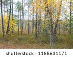 Autumn forest in the northern...