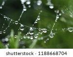 rain drops in a spider's web | Shutterstock . vector #1188668704