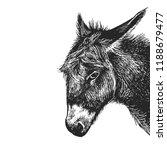 donkey. realistic portrait of... | Shutterstock .eps vector #1188679477