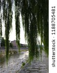 giant weeping willow tree by a...   Shutterstock . vector #1188705481