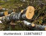 stack of felled trees in the... | Shutterstock . vector #1188768817