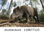 Wild Boar Hogskin
