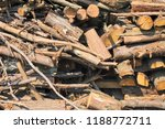 pile of tree trunks cut in... | Shutterstock . vector #1188772711