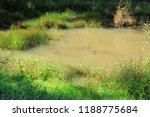 marsh pond with aquatic herbs. | Shutterstock . vector #1188775684