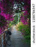 Bike Under Red Bougainvillea...