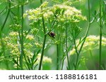 insect gather in herbs | Shutterstock . vector #1188816181