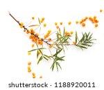 branch of sea buckthorn ... | Shutterstock . vector #1188920011