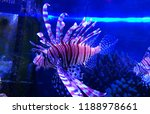 zebrafish   firefish  tastyfish ... | Shutterstock . vector #1188978661