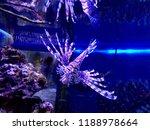 zebrafish   firefish  tastyfish ... | Shutterstock . vector #1188978664