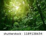 sunlit tree canopy in tropical... | Shutterstock . vector #1189138654