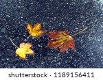 Fallen Leaves Lie On Wet...