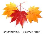 autumn maple leaves | Shutterstock . vector #1189247884