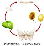 life cycle of a silkworm... | Shutterstock .eps vector #1189275691