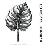 monstera leaf hand draw vintage ... | Shutterstock .eps vector #1189308571