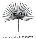 Fan Palm Leaf Hand Draw Vintage ...