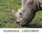 a white rhinoceros ... | Shutterstock . vector #1189318834