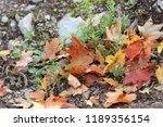fallen leaves on the ground | Shutterstock . vector #1189356154