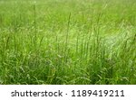 close up image of fresh spring... | Shutterstock . vector #1189419211