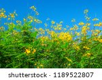 yellow flowers have the sky as... | Shutterstock . vector #1189522807