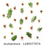 composition of leaves and... | Shutterstock . vector #1189577074