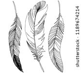 bird feather from wing... | Shutterstock . vector #1189674214