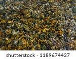 varicolored detailed texture of ... | Shutterstock . vector #1189674427