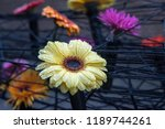 autumn outdoor floral...   Shutterstock . vector #1189744261