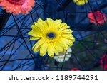 autumn outdoor floral...   Shutterstock . vector #1189744291