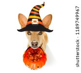 dog sitting as a ghost for... | Shutterstock . vector #1189749967