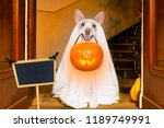 dog sitting as a ghost for... | Shutterstock . vector #1189749991