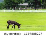 blurred photo mule is a mixed... | Shutterstock . vector #1189808227