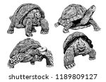Stock vector graphical set of tortoises isolated on white background vector sketch for printing 1189809127