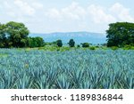 blue agave fields as far as you ... | Shutterstock . vector #1189836844
